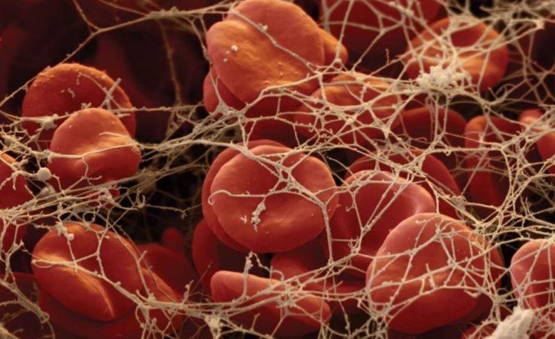 фибриноген что это такое